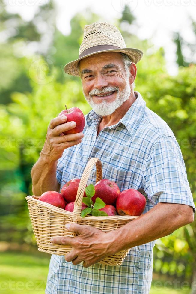 il giardiniere tiene un cesto di mele mature foto