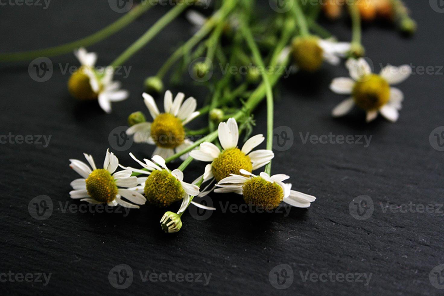 fiori di camomilla su sfondo nero foto