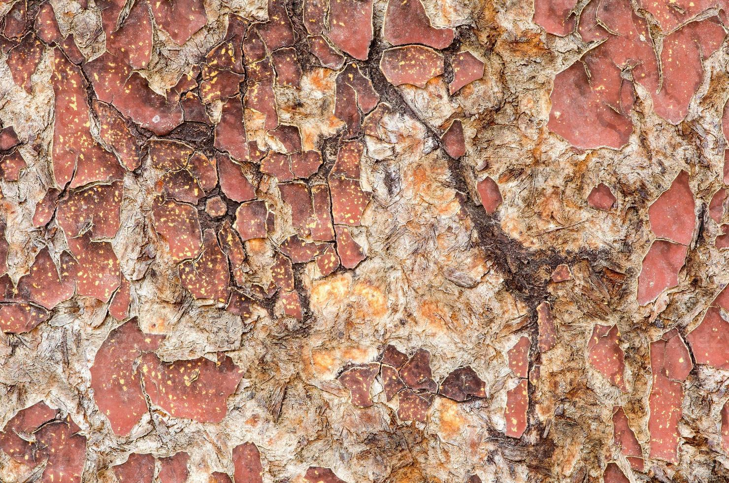 superficie di legno screpolata. foto