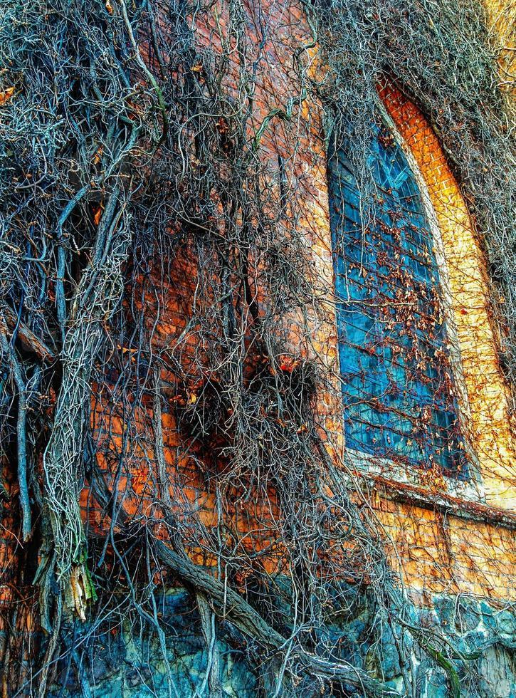 chiesa dell'edera foto
