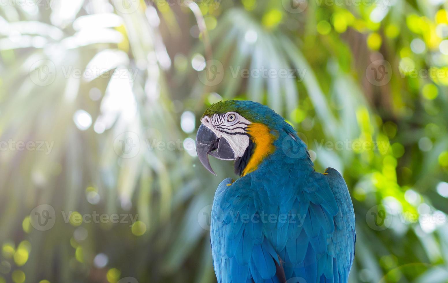 macaw alla luce del sole foto