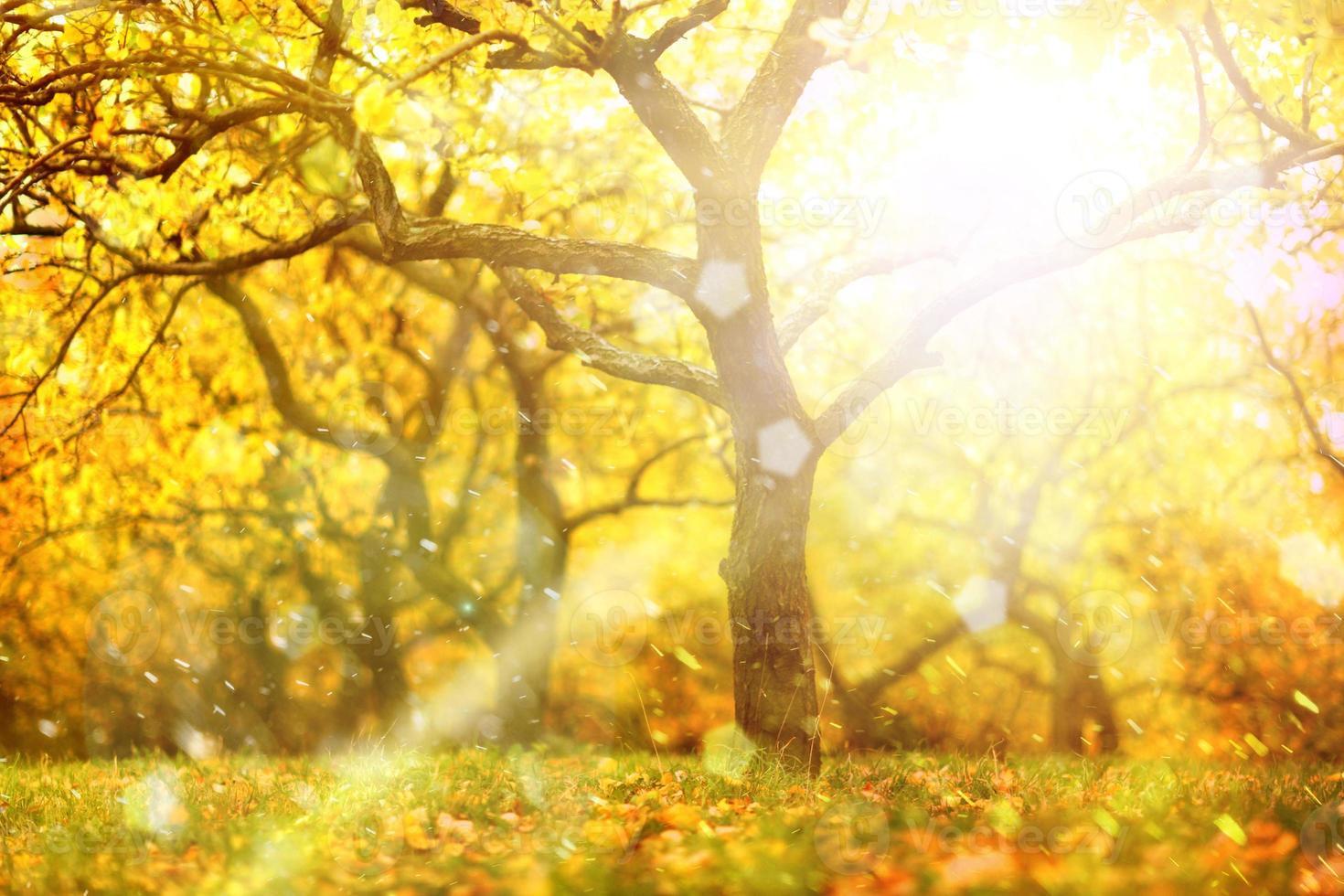 magico sfondo sfocato soleggiato albero di autunno foto