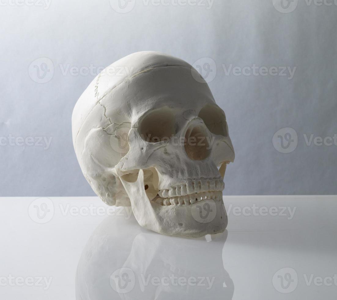 cranio foto