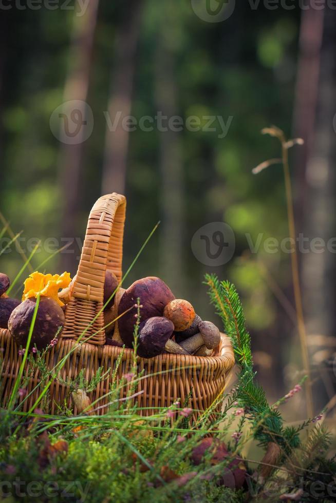 cesto autunnale pieno funghi commestibili foresta foto
