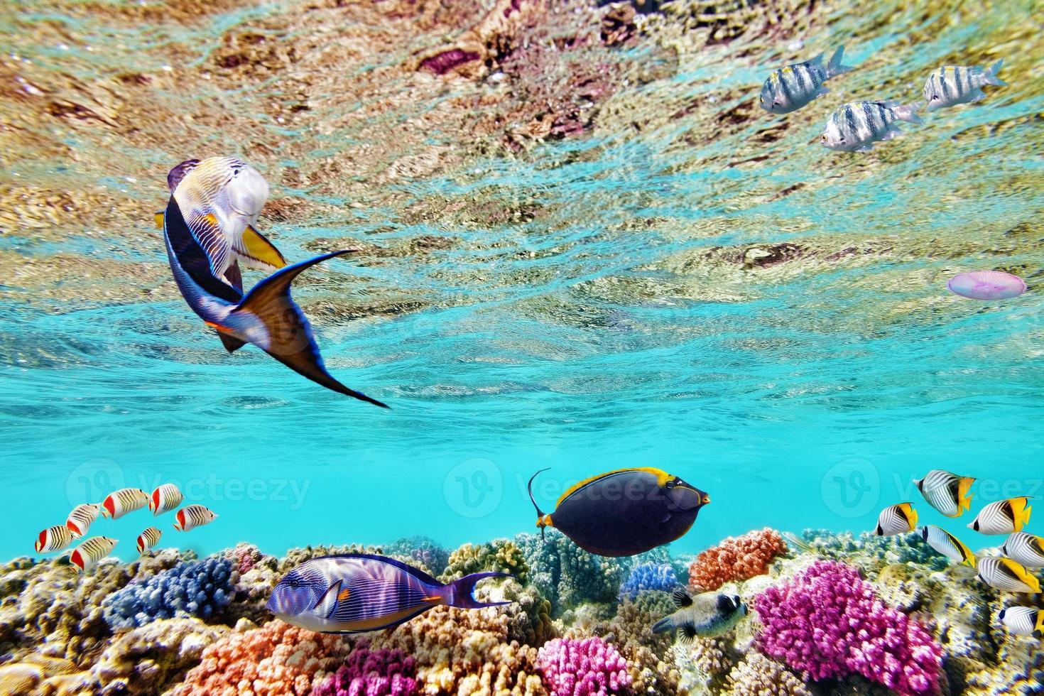 mondo sottomarino con coralli e pesci tropicali. foto
