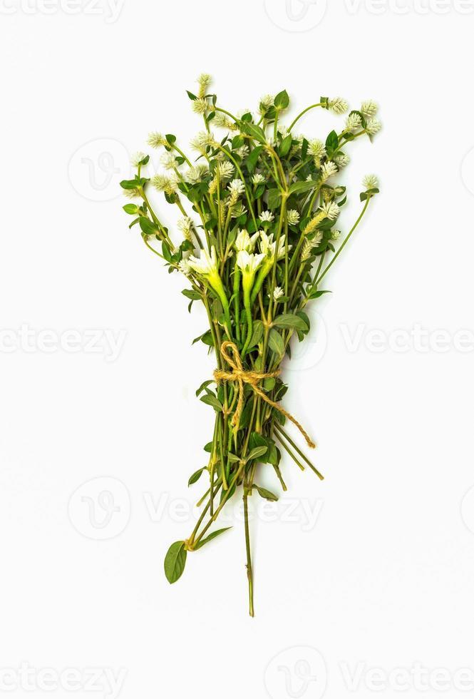 collage di foglie di vite su sfondo bianco. foto