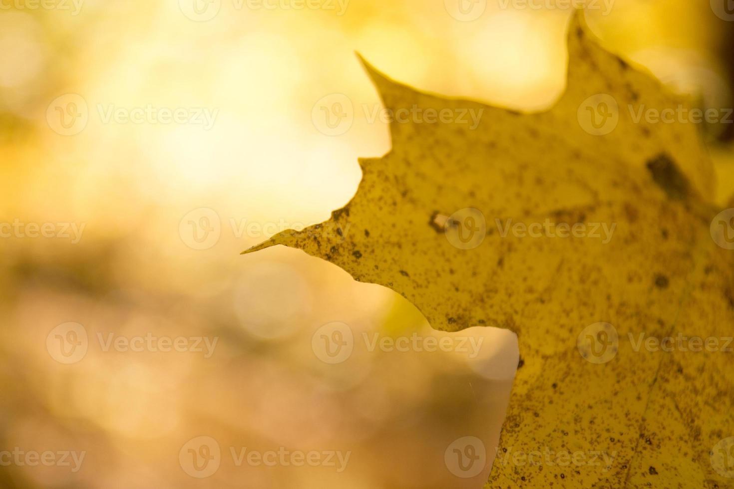 foglia gialla retroilluminata foto