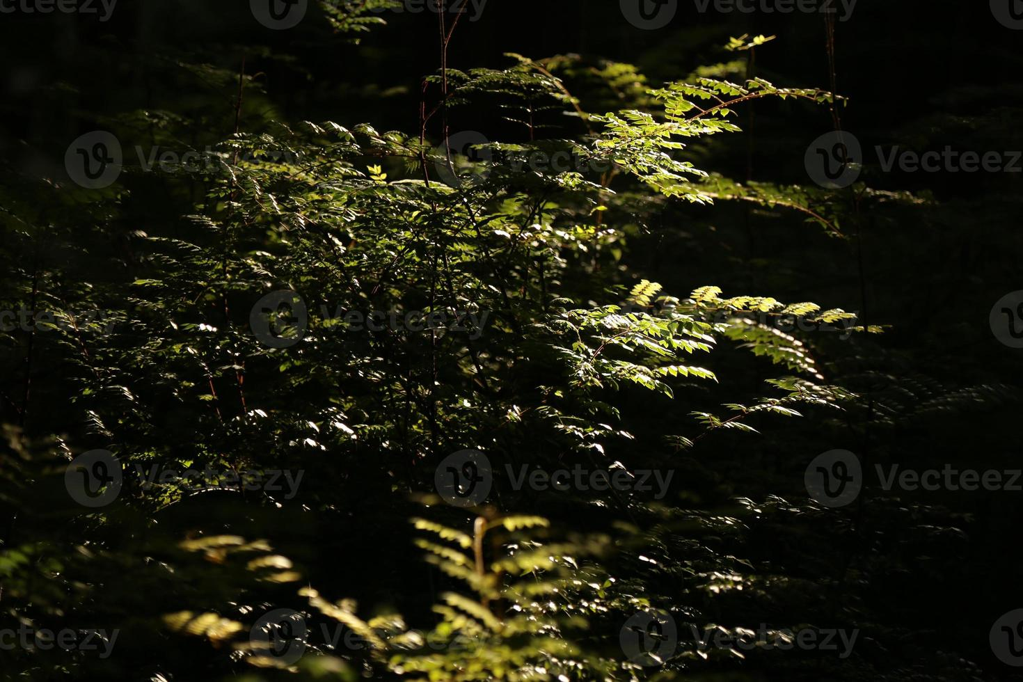 luce del sole foto