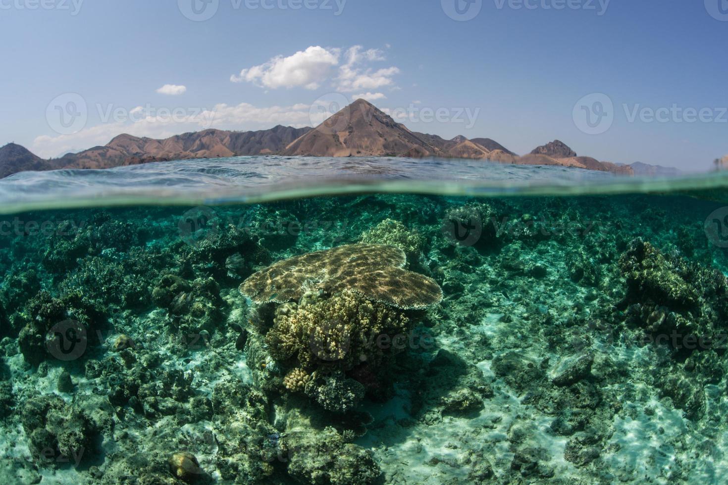 barriera corallina ed isole in Indonesia foto