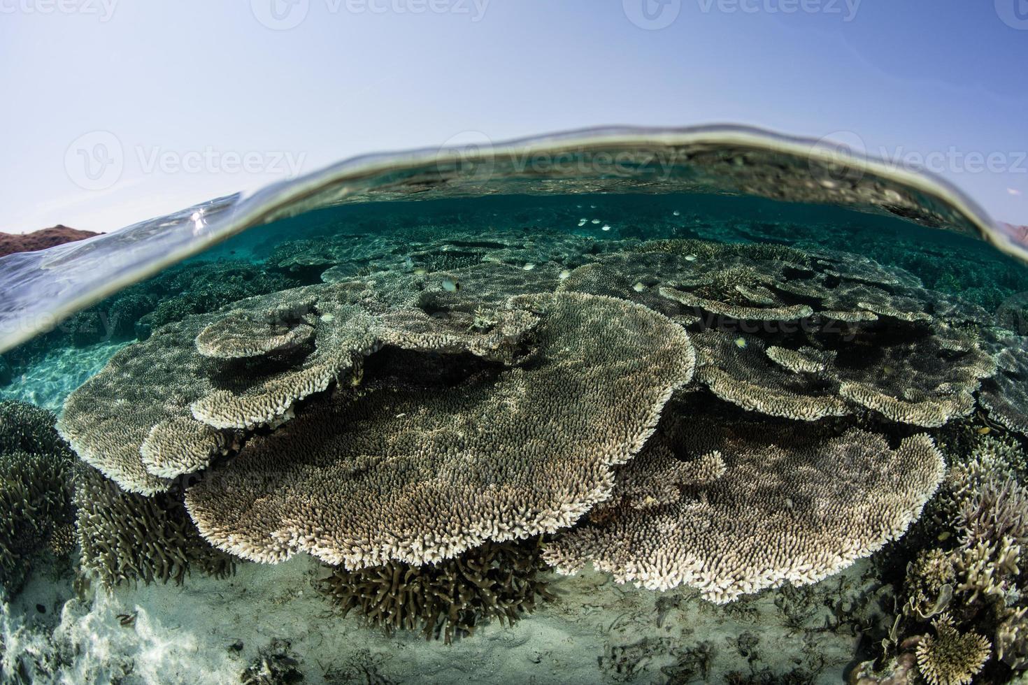 bella barriera corallina in Indonesia foto