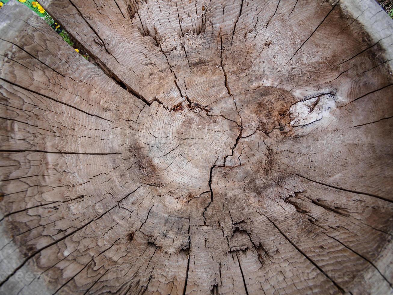 cerchio di legno foto