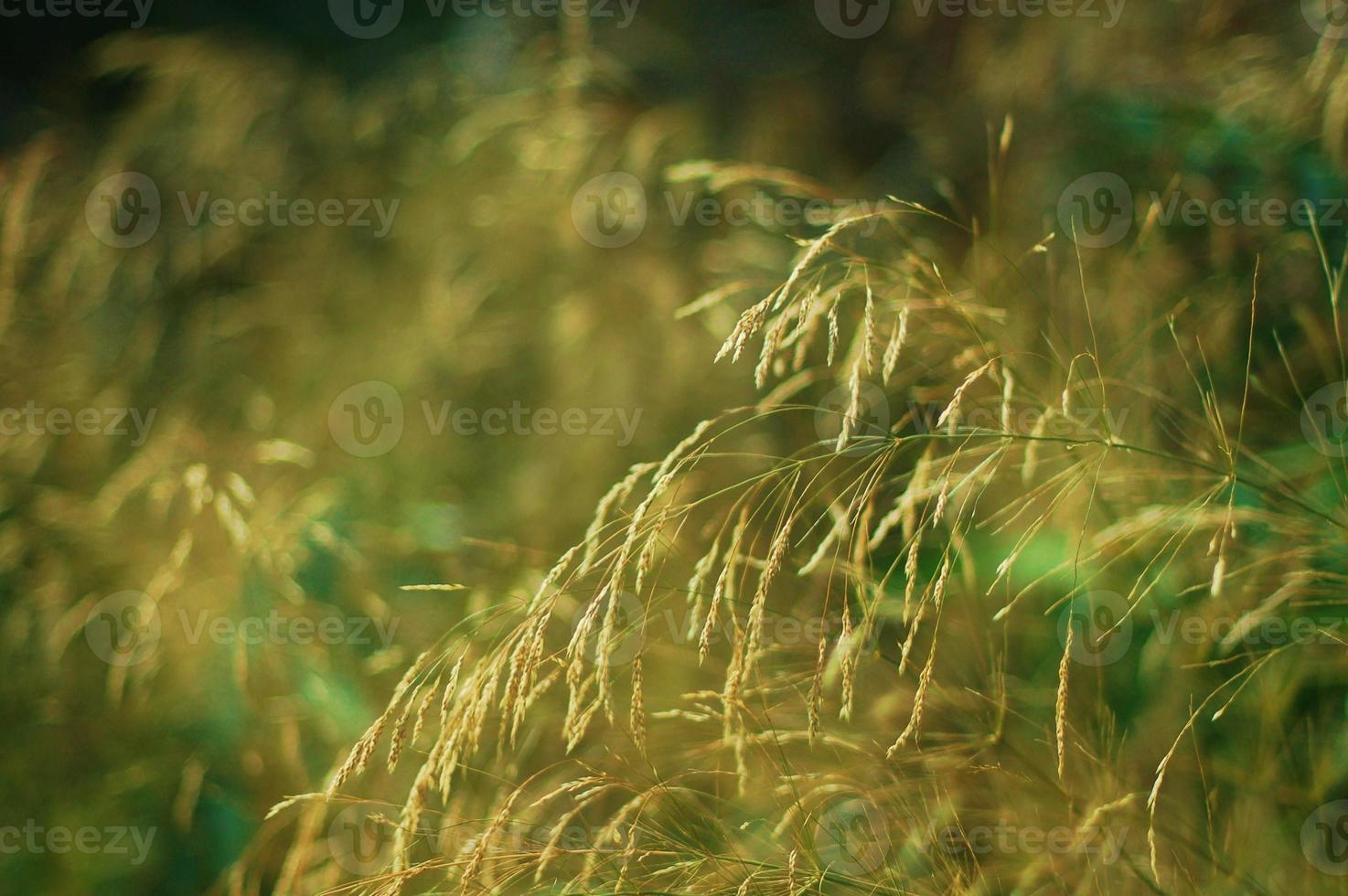 piante al vento foto