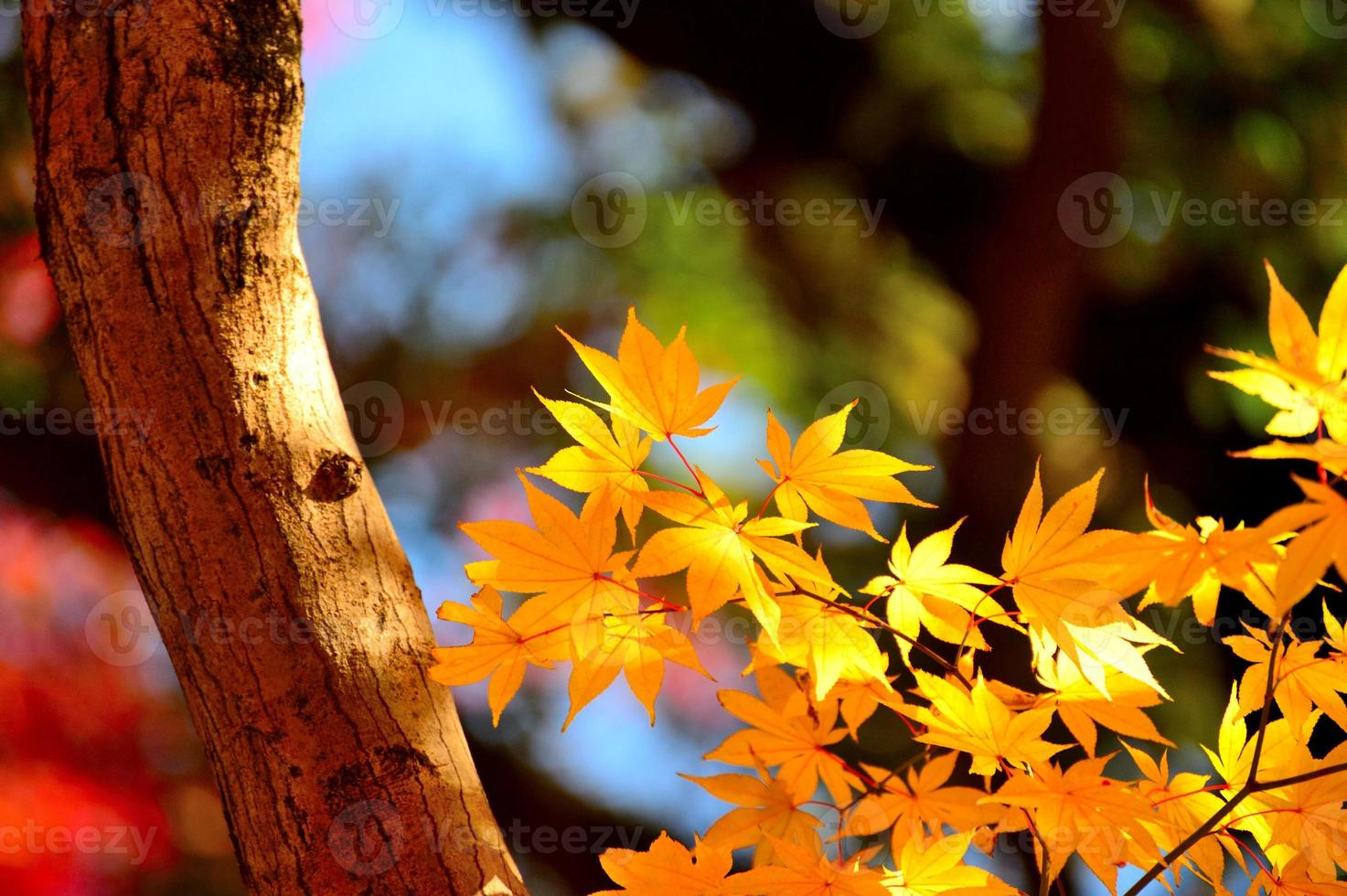 foglie gialle foto