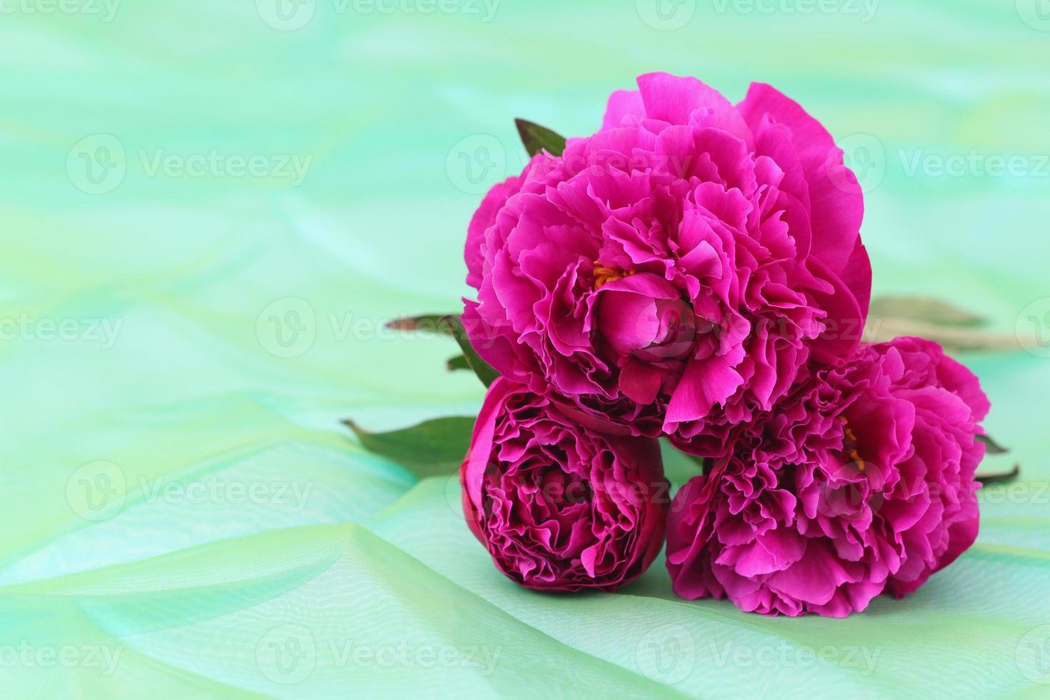rose di peonia su sfondo verde con spazio di copia foto