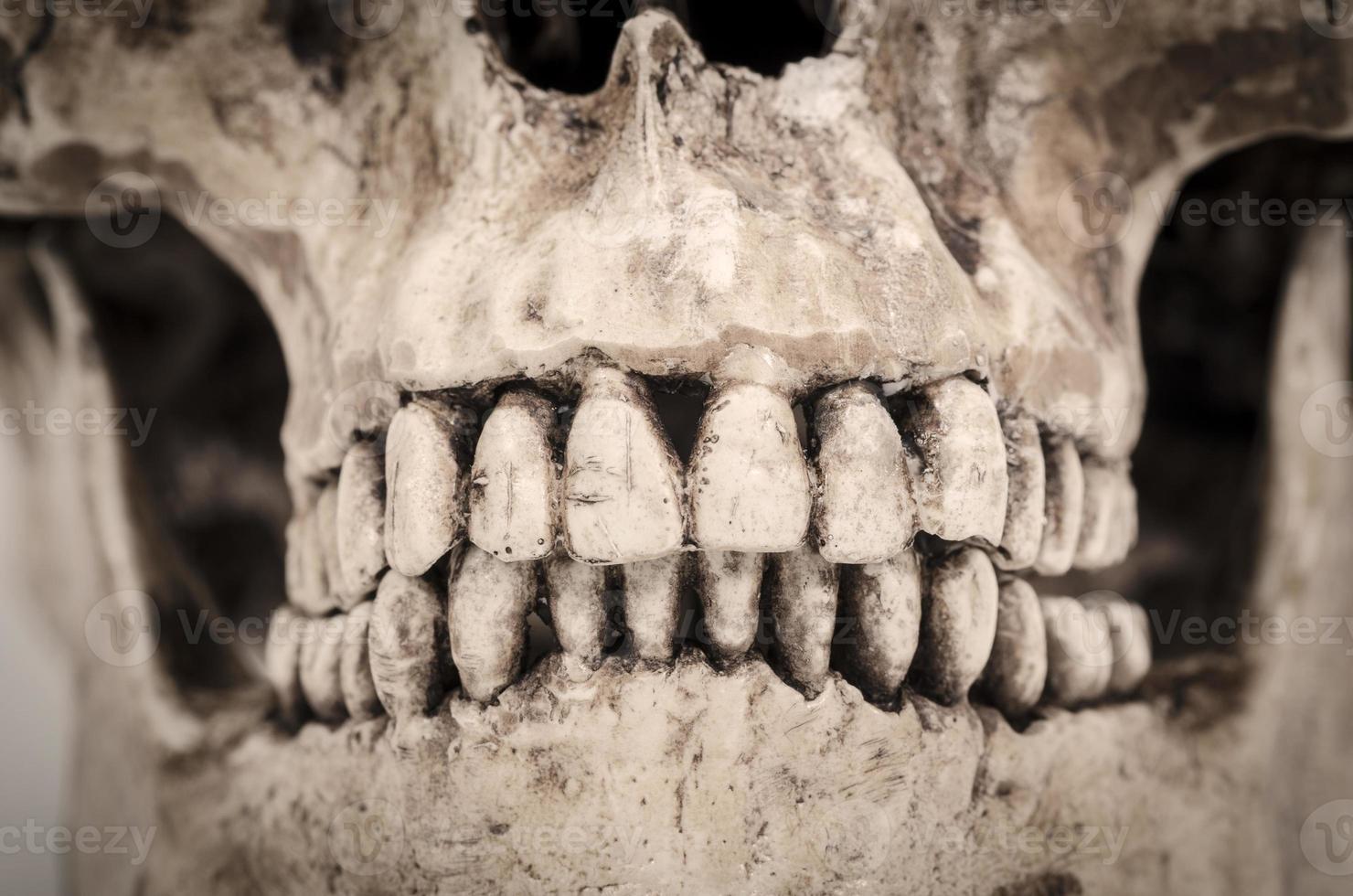 modello di denti umani (cranio) su uno sfondo bianco foto