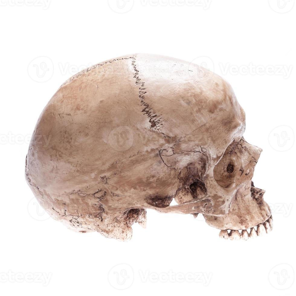 cranio isolato foto