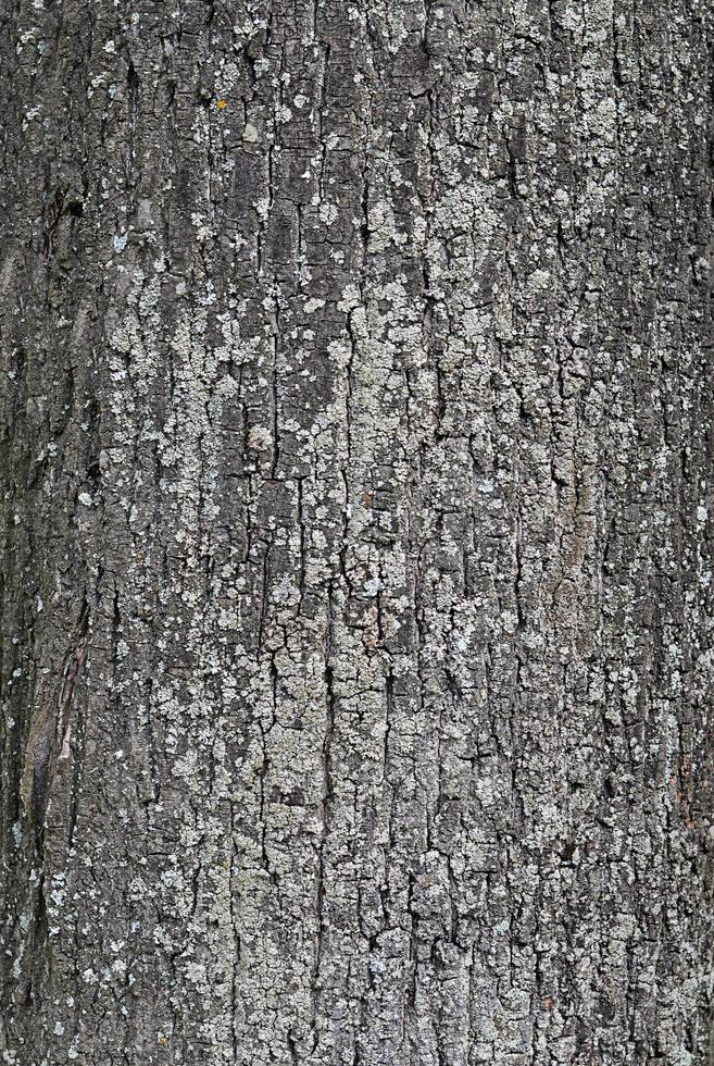 alto vicino della corteccia di albero foto