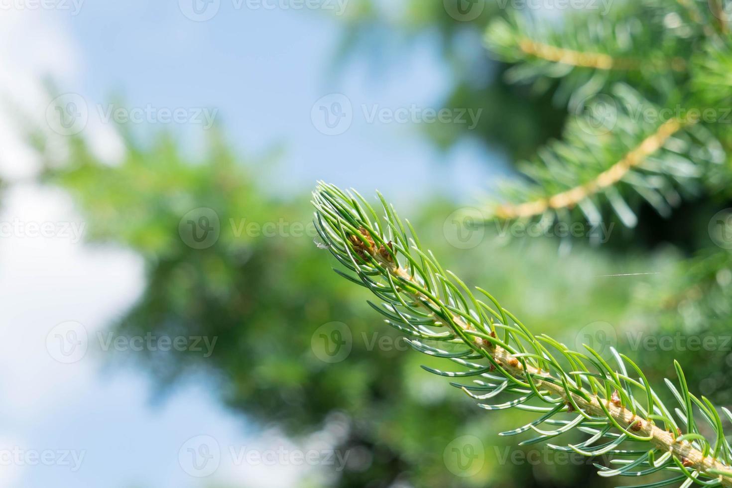 ramo di un albero da vicino foto