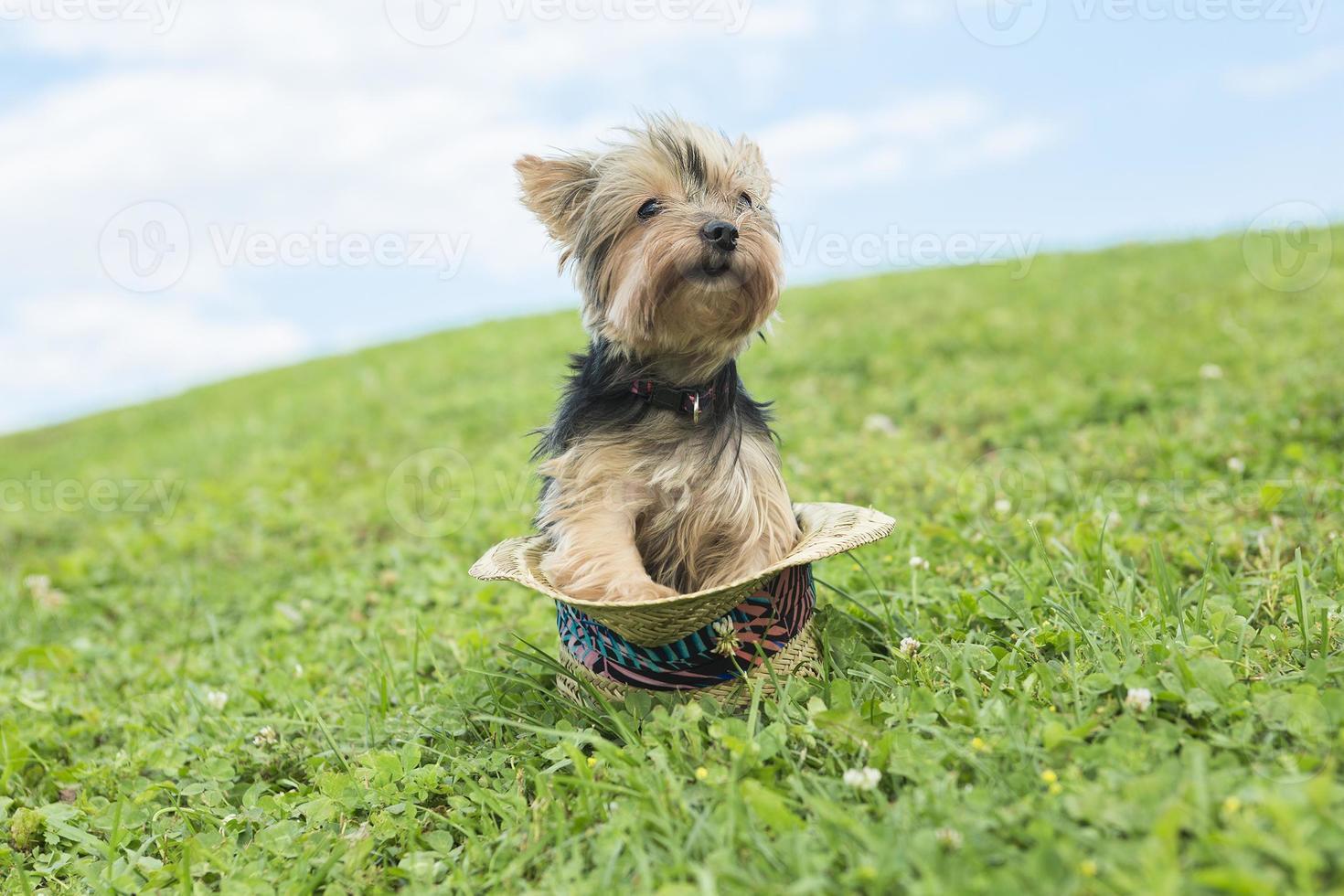 Ritratto di ragazza che mantiene grazioso cane all'aperto foto