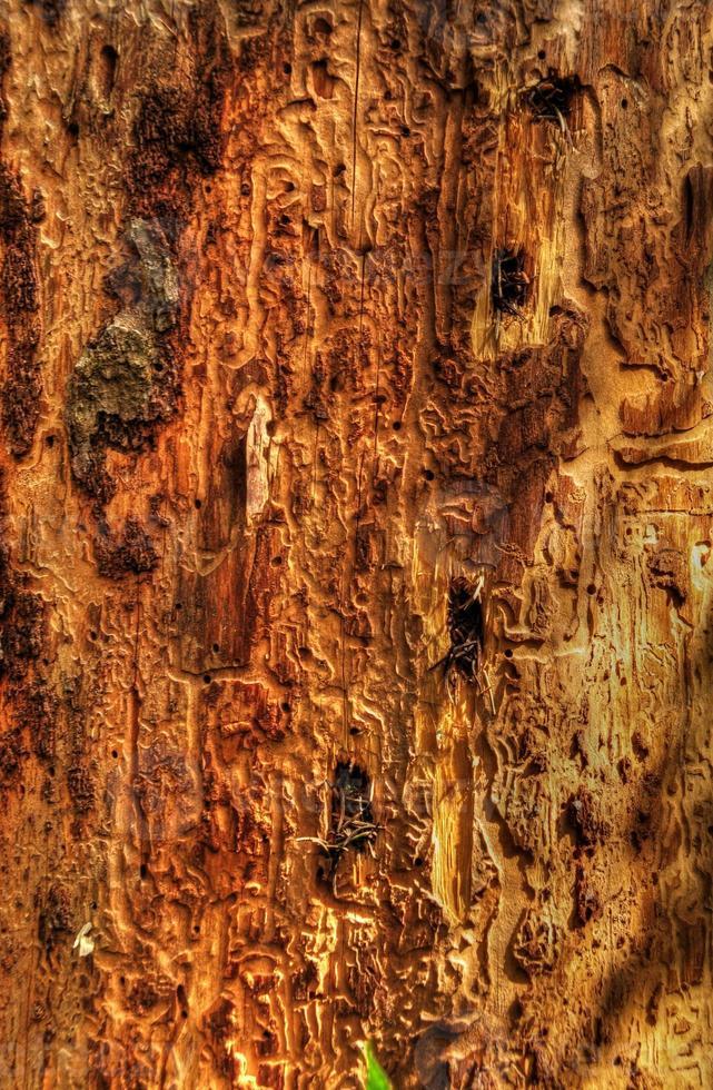 primo piano dell'albero malato foto