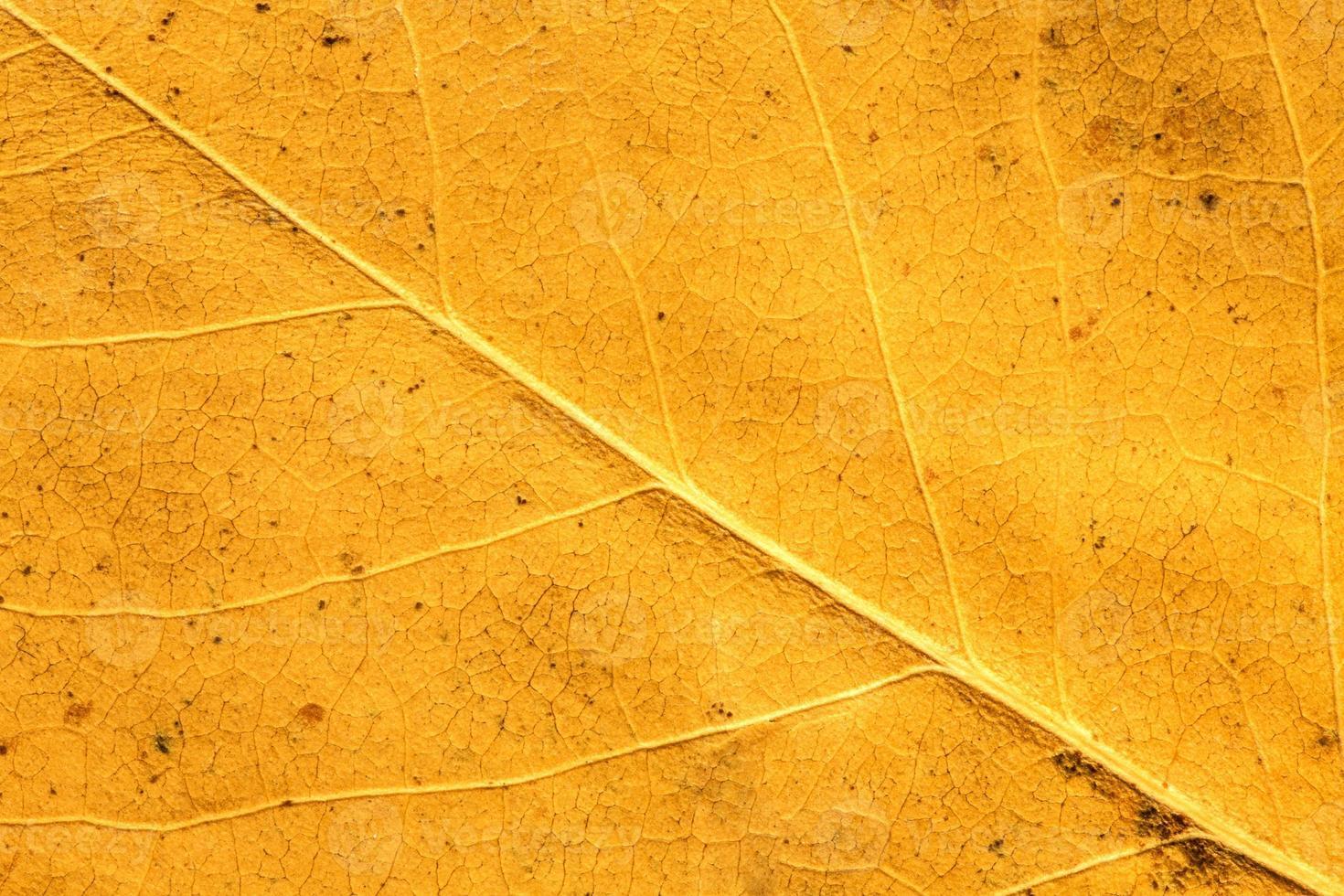 foglia d'autunno da vicino foto