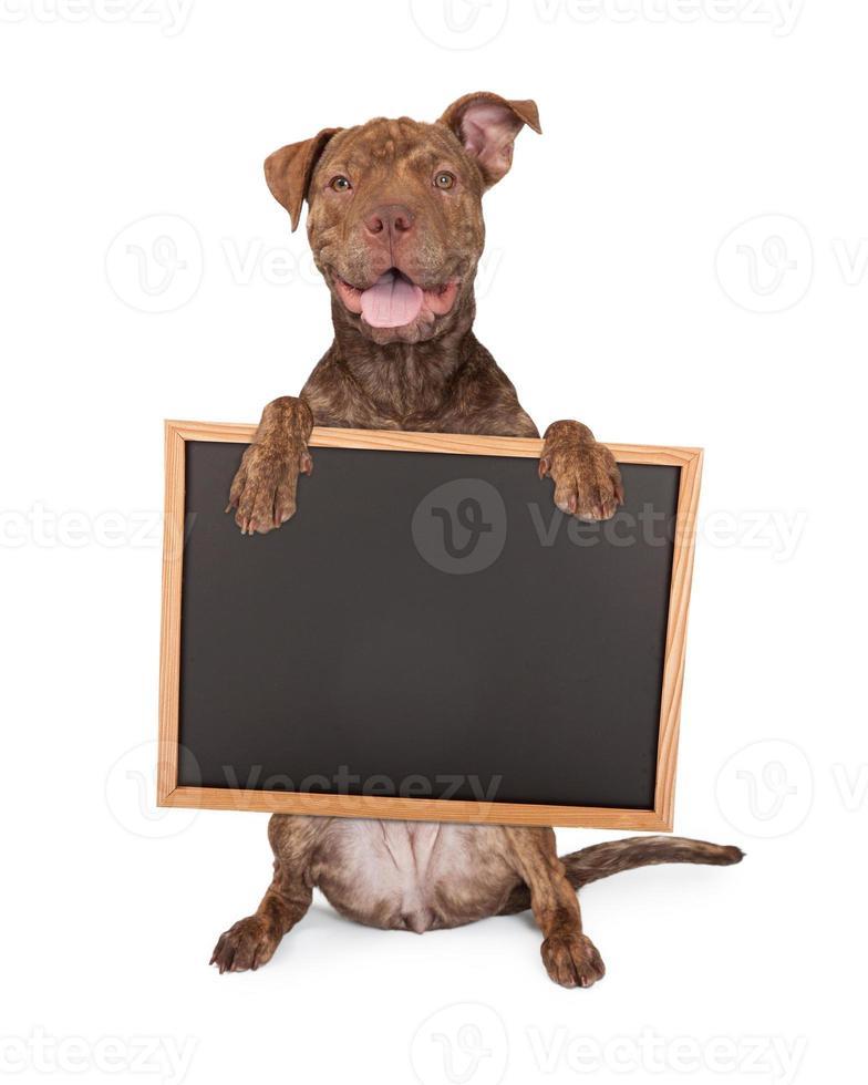 pit bull cross tenendo il bordo di gesso foto