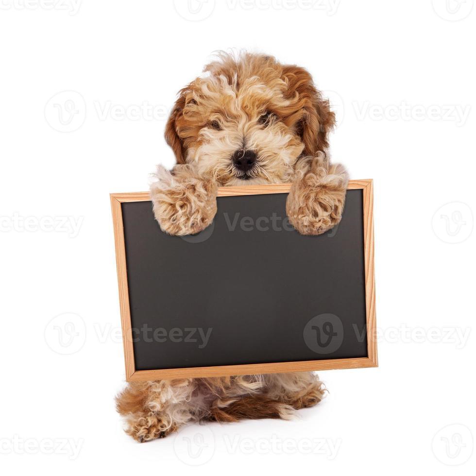 cucciolo di havanese con cartello bianco lavagna foto