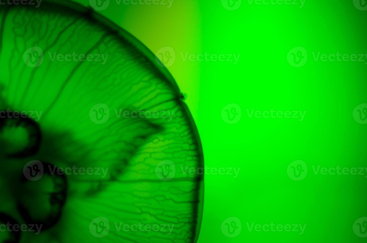 primo piano, medusa foto