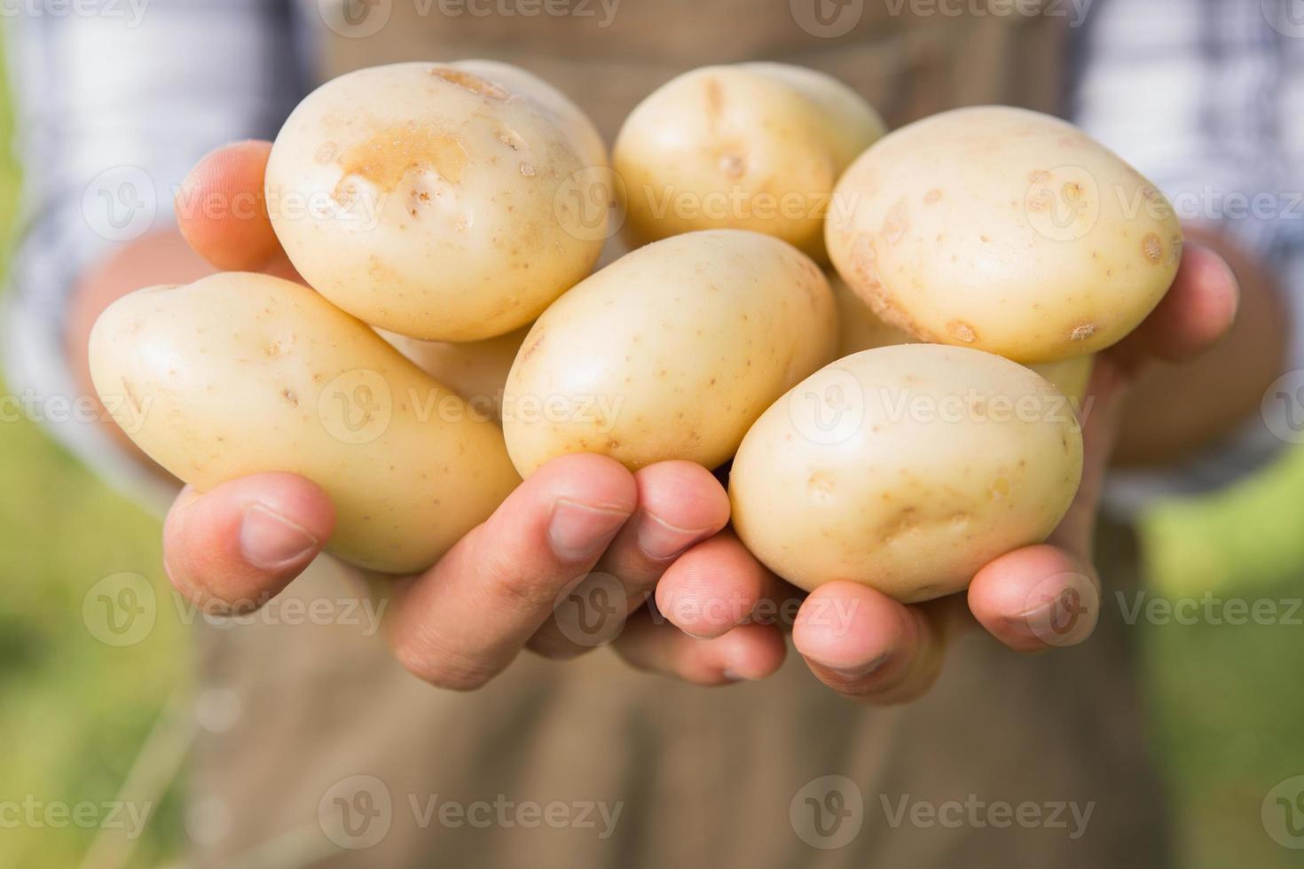 contadino che mostra le sue patate biologiche foto