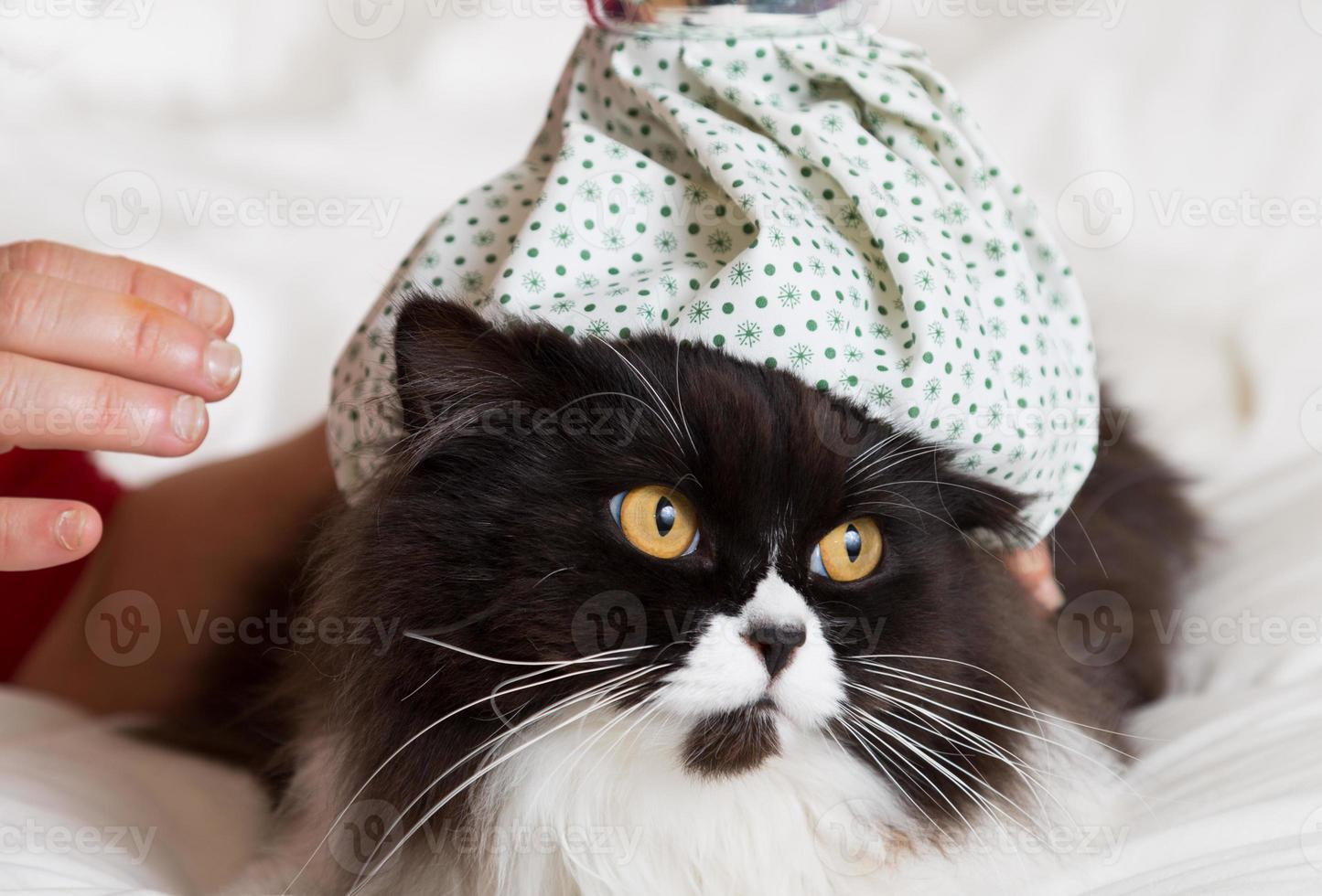 influenza cat foto