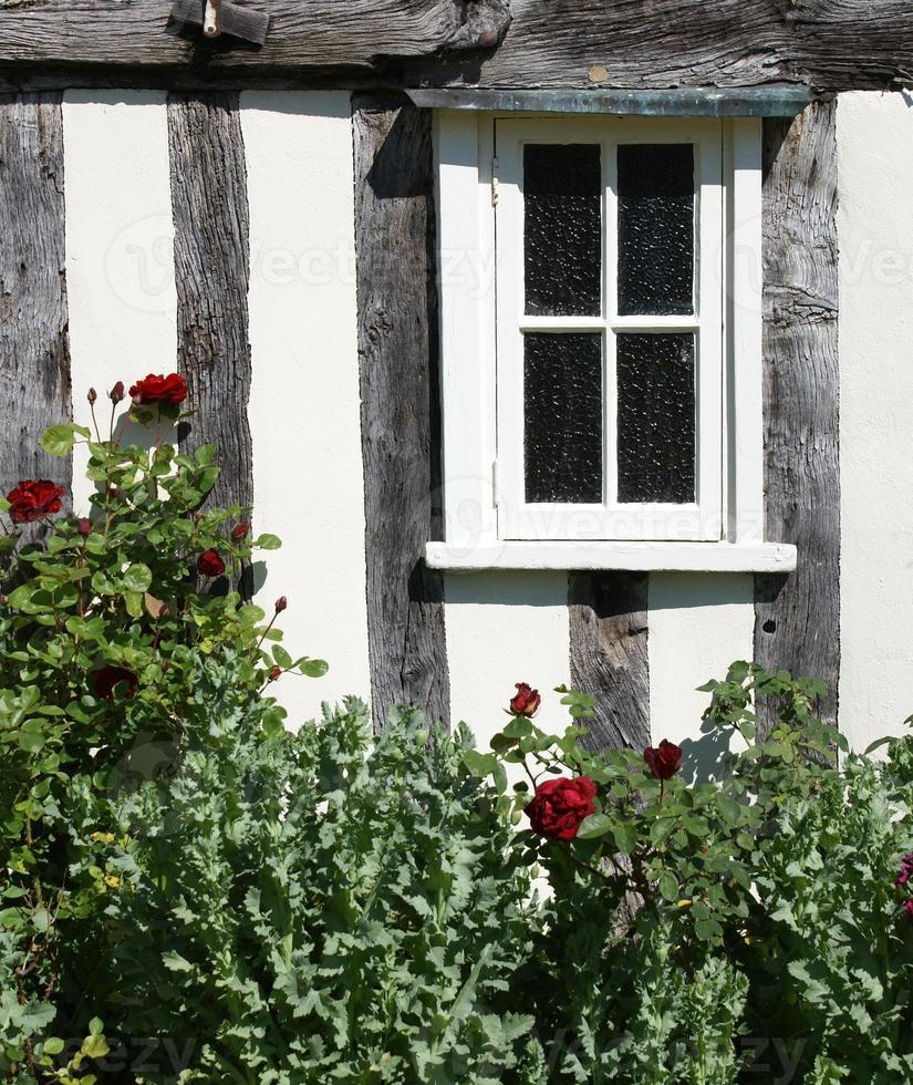 finestra e cespuglio di rose foto