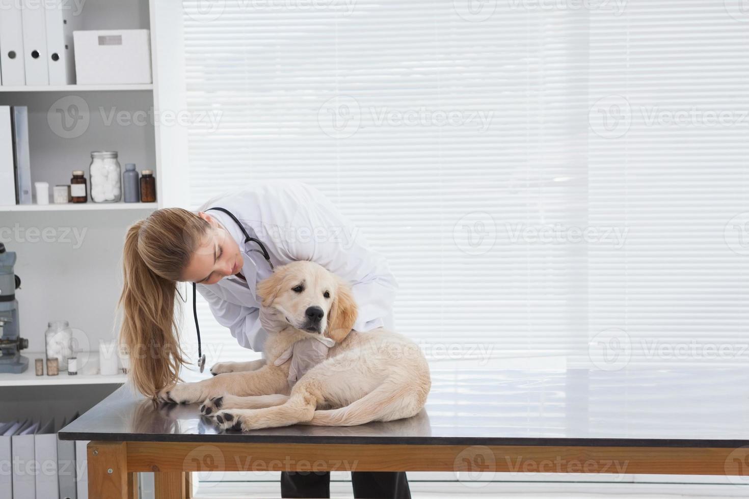 veterinario che controlla un piccolo cane foto