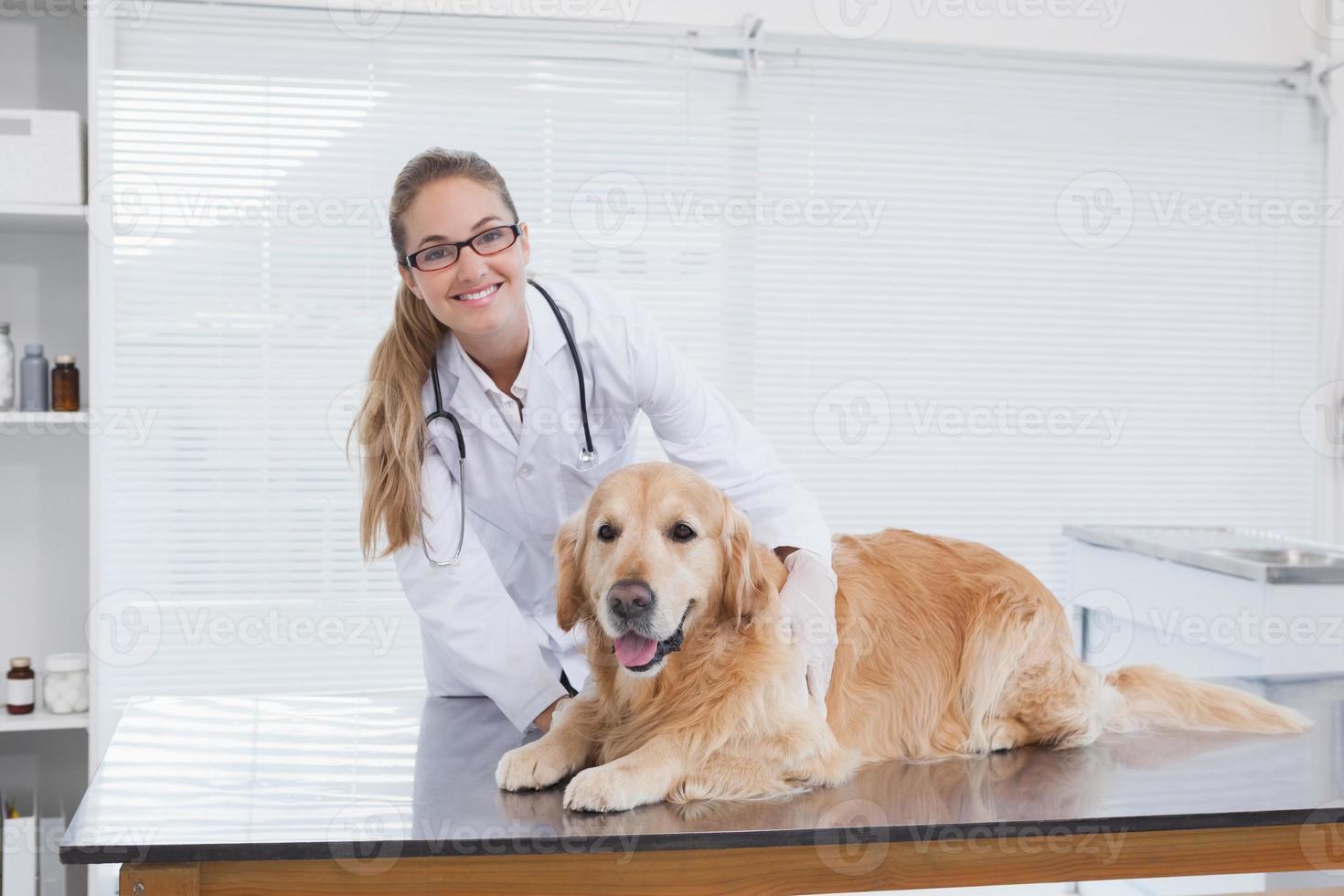 veterinario sorridente che esamina un labrador foto