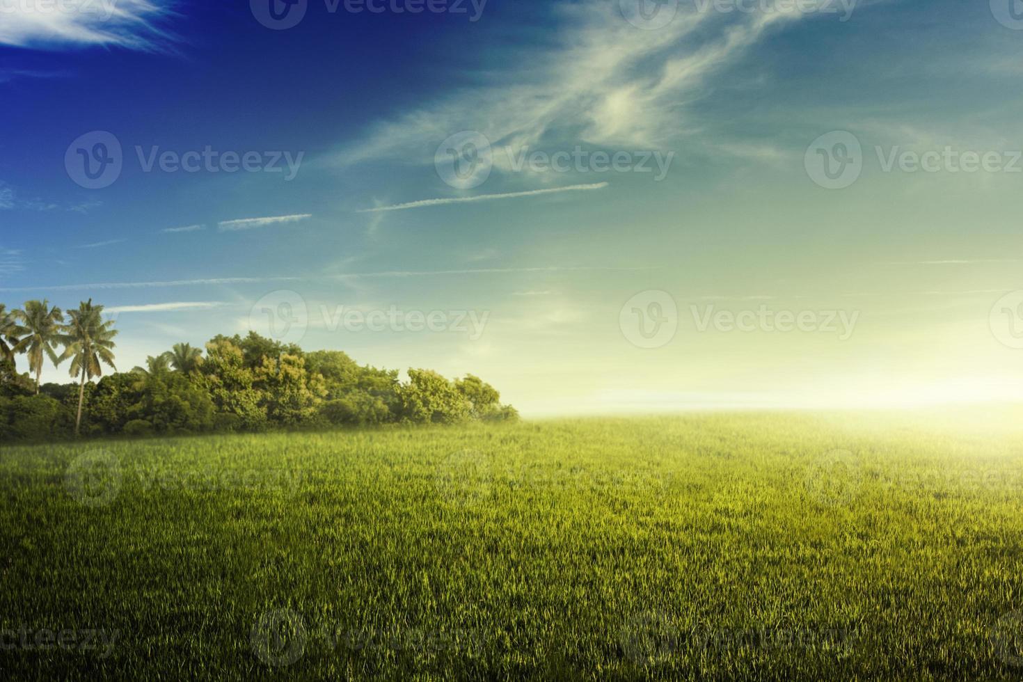 giungla e campo d'erba foto