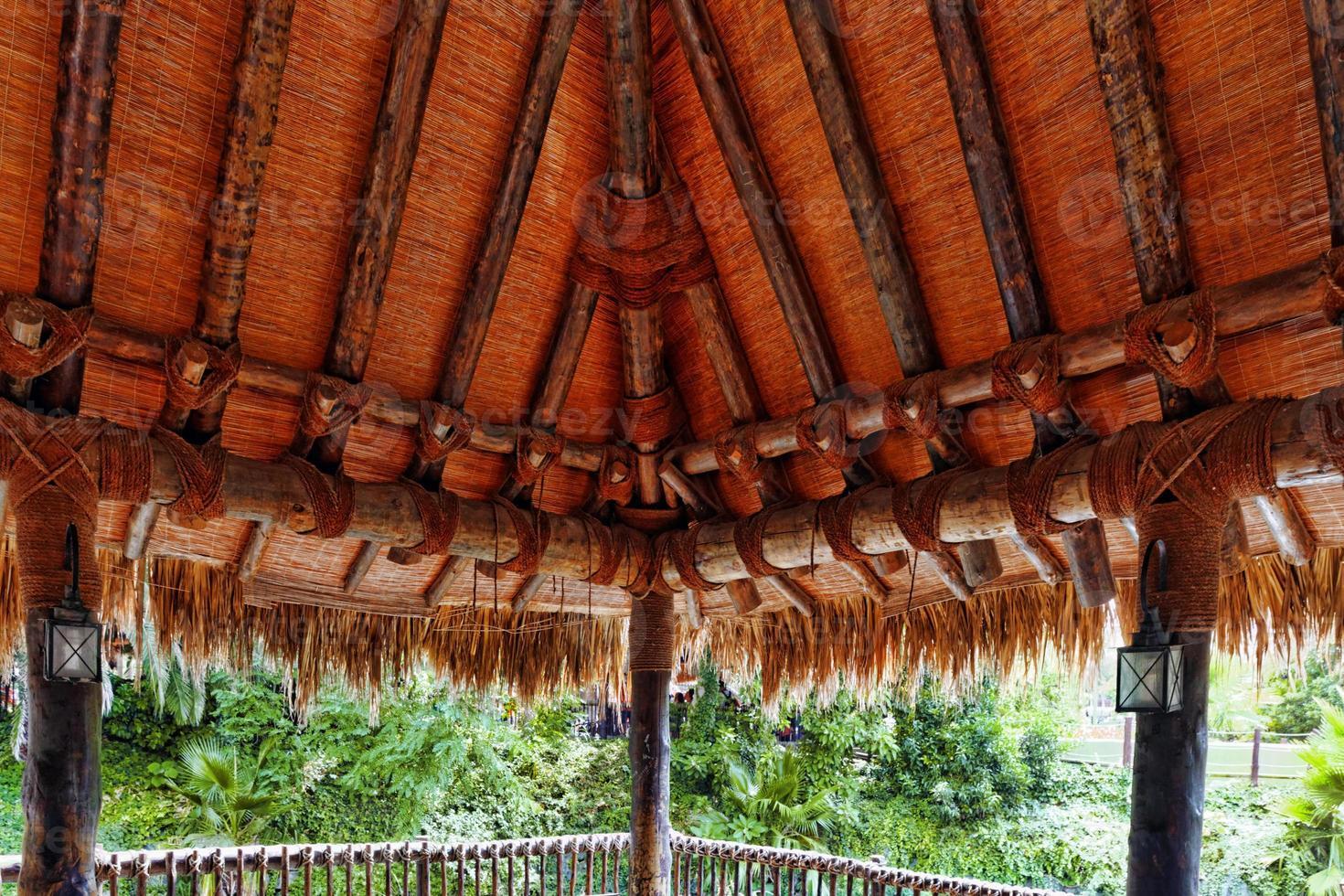 bellissimo paesaggio della giungla tropicale. foto
