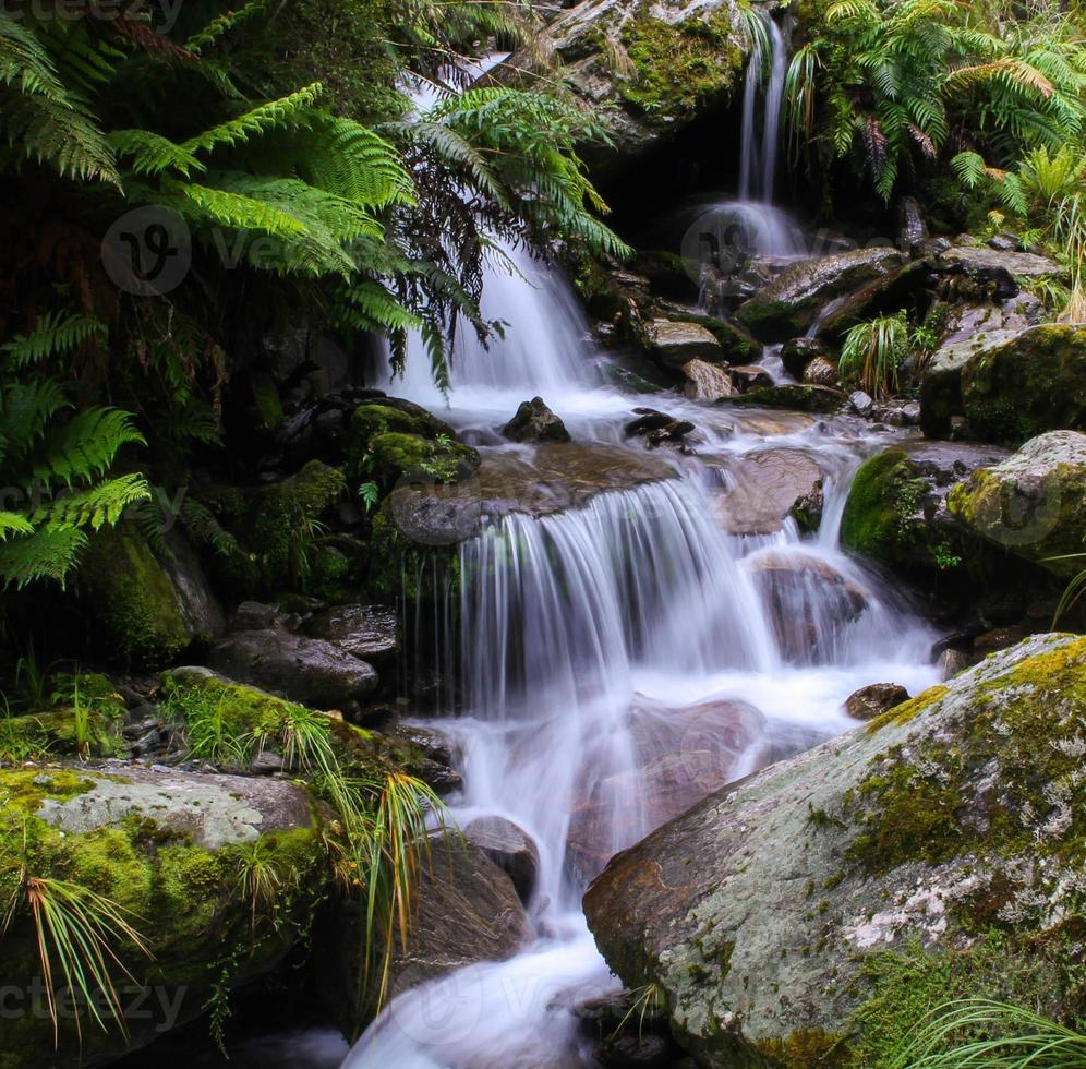 giungla cascata nuova zelanda foto
