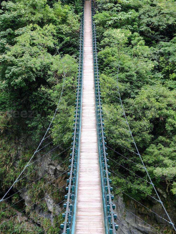 ponte verso la giungla foto
