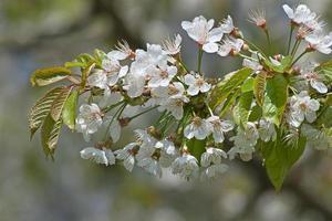 giardino delle mele foto
