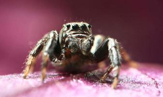 maglione ragno foto