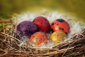 cestino delle uova di Pasqua foto