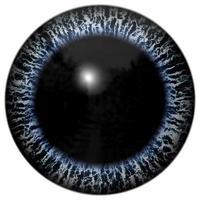 occhio animale con iris colorato, vista di dettaglio nel bulbo oculare foto