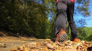 uomo che cammina la pista di fondo nella foresta di autunno