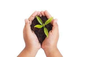 mani che tengono pianta giovane. concetto di ecologia foto