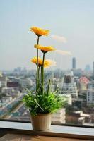 fiore vicino all'edificio per uffici della finestra foto