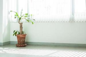 ornamentale in vaso foto