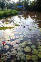 pianta acquatica. foto