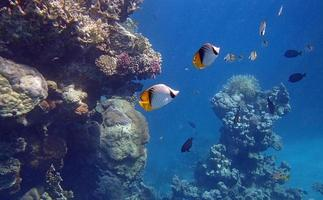 snorkeling fantastico foto