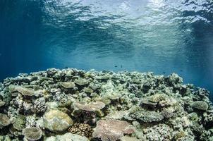 dura barriera corallina foto
