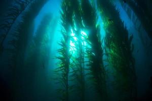 letto alghe foto