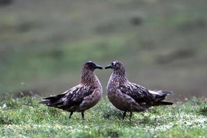 coppia di uccelli foto